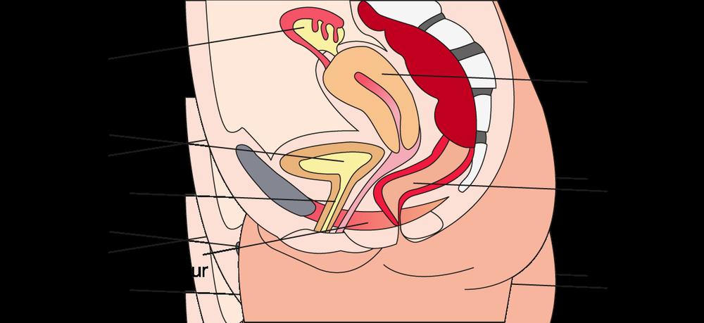 Der Beckenboden - Femcon®